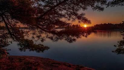 4k Lake Sunset Pine Tree Nature During