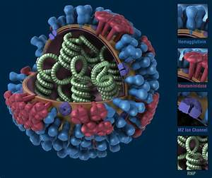 CDC H1N1 Flu | Images of the H1N1 Influenza Virus