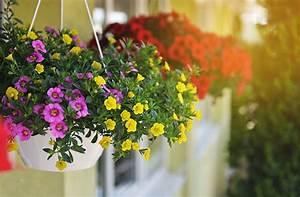 Blumen Für Den Balkon : blumen f r den balkon bl hende pracht im blumenkasten ~ Lizthompson.info Haus und Dekorationen