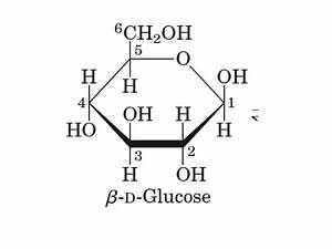 Fischer and Haworth projections; Anomers | Biochem JM