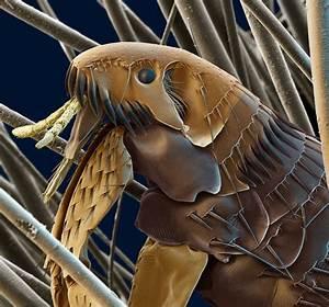 Site De Discussion : mon site galerie ~ Medecine-chirurgie-esthetiques.com Avis de Voitures