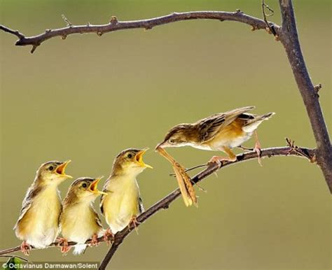 feeding time for small birds amazing never u seen
