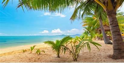 Tropical Palm Trees Landscape Nature Sky Sand