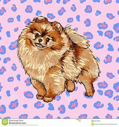 Pomeranian Illustrations Dog Spitz Illustration Vector Breed