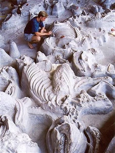 ashfall fossil beds state historical park 20 things to do in nebraska animals usa and the