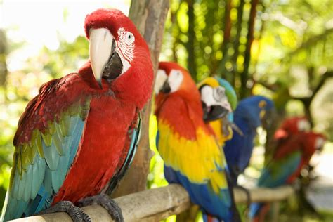 27+ Different Types Of Parrots With Picture And Their Names