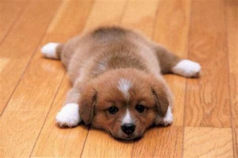 Choosing The Best Hardwood Floors For Dogs  The Basic