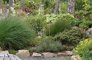 Schattenpflanzen Fr Den Schattengarten PflanzenReich