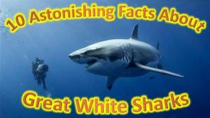 What The Fact 10 Astonishing Facts About Great White