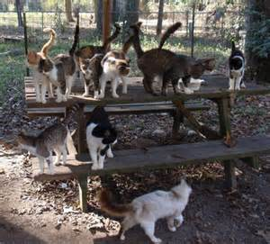 cat colony survivors of cat colony shootings get help as