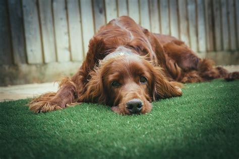 stock photo  dog garden