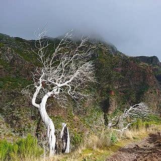 Mākoņus redzēt... #Madeira #BezFiltra #NoFilter #FlyMeAway… | Flickr