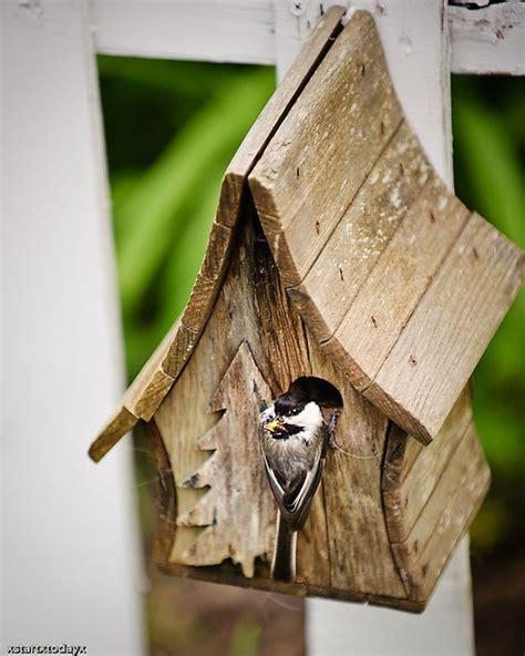 chickadeebirdhouseplans  chickadee bird house houses plans designs wood projects