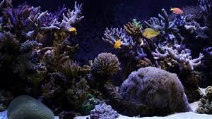 Die Besten Aquarien : akvaryum masa st arka plan resimleri ~ Lizthompson.info Haus und Dekorationen
