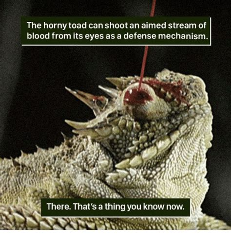 Horny Toad Meme - horny toad meme 28 images effective power forums at modded mustangs 25 best memes about