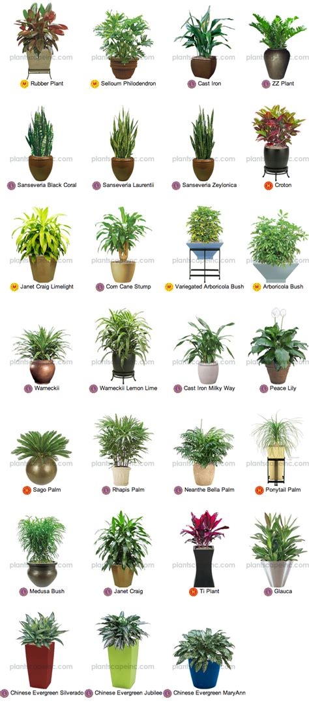 pequenas plantas tropicais  interior horas  jardins