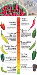 Hot Peppers Varieties