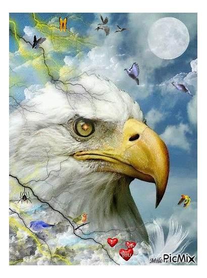 Eagle Picmix