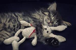 Was Brauchen Katzen : katzenbilder die 30 tollsten bilder von katzen ~ Lizthompson.info Haus und Dekorationen