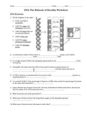 dnathe molecule heredity worksheet fill