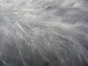перья, texture feather, download background, photo, image ...