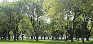 Tree, Planting, Strategy, U2013, City, Of, Toronto