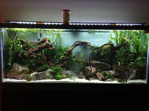 Home Aquarium Design Ideas by You Seen A Looking 55 Gallon Page 2