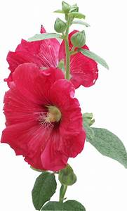 Vase Rond Transparent : tubes fleurs rouges roses ~ Teatrodelosmanantiales.com Idées de Décoration