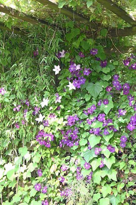 Sichtschutz Garten Fetter by 395 Besten Garten Und Pflanzen Bilder Auf Der