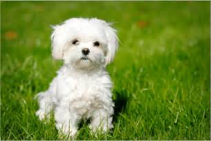the truth behind hypoallergenic breeds