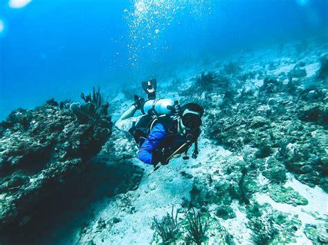 jupiter grouper goliath dive looking travel