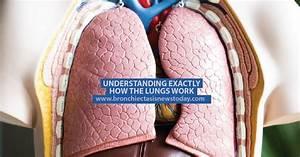 134 Best Mac Lung Disease Images On Pinterest