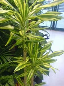 Plante Verte D Appartement : plante verte interieur depolluante ~ Premium-room.com Idées de Décoration