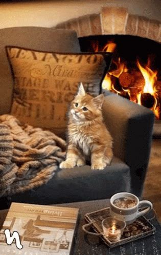 cat fireplace gif cat fireplace discover gifs