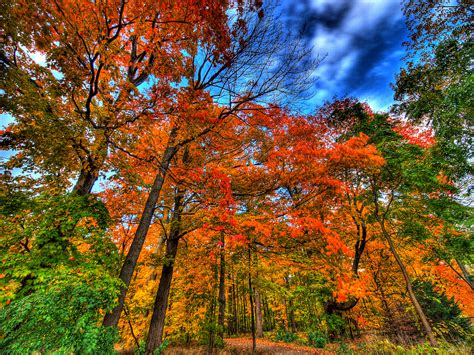 6 Tips on How To Do Fall Lawn Care in Atlanta, GA ...