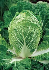 Salat Pflanzen Abstand : chinakohl pflanzen den beliebten salatkopf richtig pflegen ~ Markanthonyermac.com Haus und Dekorationen