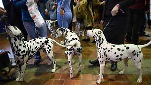 photos westminster kennel club dog show With show me dog kennels