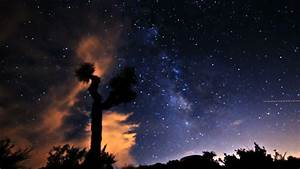 Night Time Lapse With Lone Tree And Star Trailing During ...