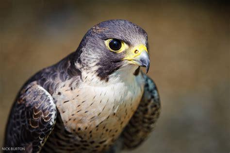 Nick Burton's Wildlife Photography