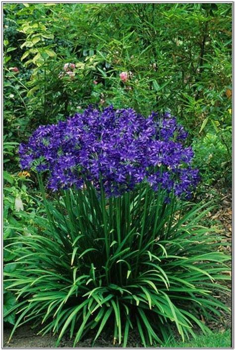 flowers all summer perennials that bloom all summer long blue perennial flowers that bloom all summer flower
