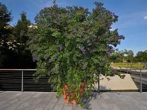 Balkon Bäume Im Topf : k belpflanzen ~ Frokenaadalensverden.com Haus und Dekorationen