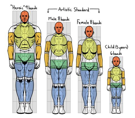 Rand swenson, d.c., m.d., ph.d. Standard Proportions Of The Human Body