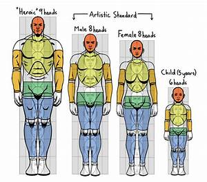 Standard Proportions Of The Human Body