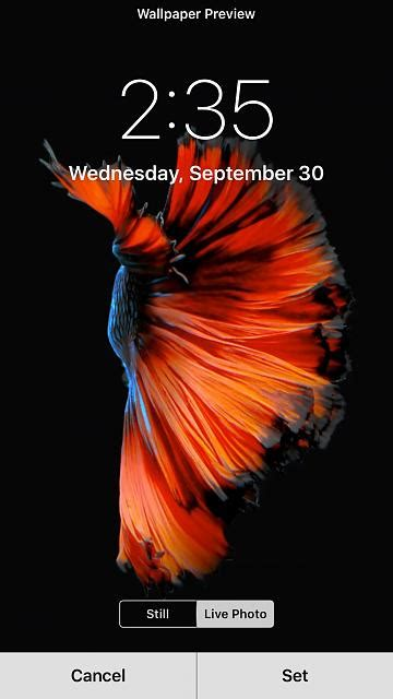iphone 6 live wallpaper live wallpapers not working iphone ipod forums