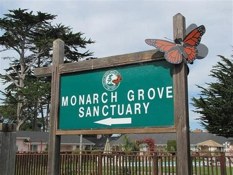 pacific grove preschool monarch butterfly sanctuary city of pacific grove 328