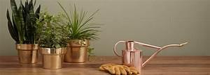 Welche Pflanzen Fürs Schlafzimmer : pflanzen f r einen besseren schlaf ~ Frokenaadalensverden.com Haus und Dekorationen
