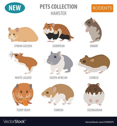 hamster picture   jpg hp elitebook  leaabh paradigit aspose jpg  jpg