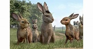 Watership Down TV Review