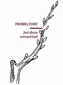 Pruning Cherry Trees