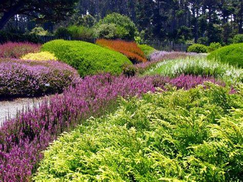 mendocino coast botanical gardens daffodils at the mendocino coast botanical gardens